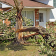 Stock Photo: Fallen Tree