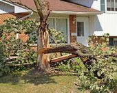 Fallen Tree — Stock Photo