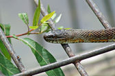 Water Snake — Stock Photo