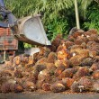 Uploading Palm Oil fruits — Stock Photo #12891866