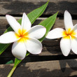 Tropical flowers frangipani (plumeria) — Stock Photo #15659139