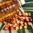Stock Photo: Palm Oil fruits