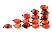 Nasiona świeżego oleju palmowego — Zdjęcie stockowe