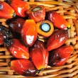 Close up of fresh oil palm fruits, selective focus. — Stock Photo
