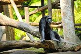 Schattig chimpansee — Stockfoto