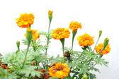 Beautiful wild flowers — Stock Photo