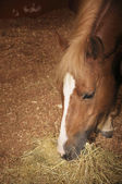 Beautiful horse — Stock Photo