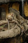 Monkeys in Taipei Zoo — Stock Photo