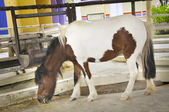 Beautiful ponny — Stock Photo