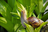 Snail against texture background. — Stock Photo