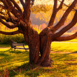 Stock Photo: Magic tree in park