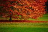 Lonely autumn tree — Stock Photo