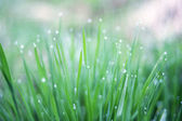 The Morning grass with dew — Stock Photo