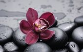 Burgundy flower on the stone — Stock Photo