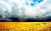 Wheat field before the storm — Stock Photo