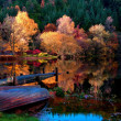 Autumn forest around the lake — Foto Stock