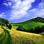 Path on a mountain meadow — Stock Photo