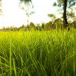 green nature grass Wallpaper. fantasy nature facebook fantasy art timeline cover 1920x1080...