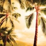 Обои для рабочего стола Пальма, пальмы, пейзажи, природа, лето, вечер, пляжи.