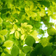 Bright green leaves — Stock Photo #32091857