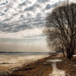 Autumn tree by the lake — Stock Photo #32091945
