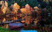 Autumn forest around the lake — Stock Photo