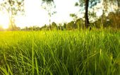 Green grass in the meadow — Stock Photo