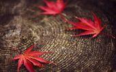 Autumn leaves on a tree stump — Stock Photo