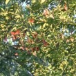 Monarch Butterfly Migration Cluster — Stock Video