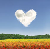 Heart cloud over colorful flowers — Stock Photo