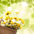 Yellow flowers in basket — Stock Photo #23816779