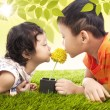 Kissing yellow flower together in park — Стоковое фото #23816983