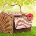 meisje met picknick — Stockfoto