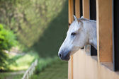 Lonely horse — Stock Photo