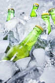 Cold beer bottles on ice 1 — Stock Photo