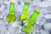 Tři láhve piva na ledě — Stock fotografie