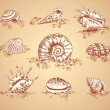Royalty-Free Stock Vector Image: Collection graphic images seashell