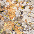 Stock Photo: Granite mossy