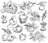 Freehand drawing apples — Stock Photo