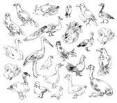 Wild birds — Stock Photo