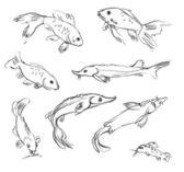Peixes de aquário — Fotografia Stock