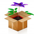 Clematis in a pot out of the box — Stock Photo