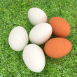 Eggs on the grass — Stok fotoğraf