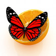 Red butterflys on a half oranges on a white background — Stock Photo
