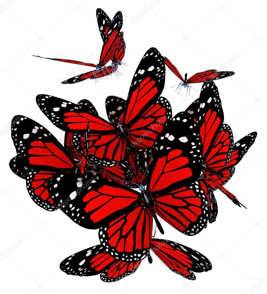 孤立在白色背景上的红色蝴蝶