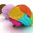 Stock Photo: Human brains