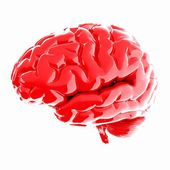 Человеческий мозг — Стоковое фото