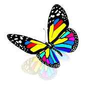 Colorful butterfly — 图库照片