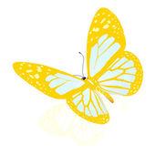 Skönhet fjäril — Stockfoto