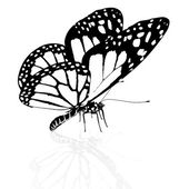 Black and white beautiful butterfly. High quality rendering — Stock Photo
